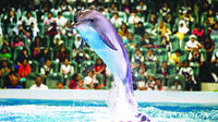 2-day-afternoon-desert-safari-dubai-dolphinarium-and-half-day-city-in-dubai-291615.jpg