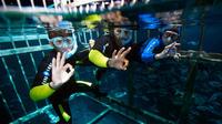 cage-snorkeling-in-dubai-299173.jpg