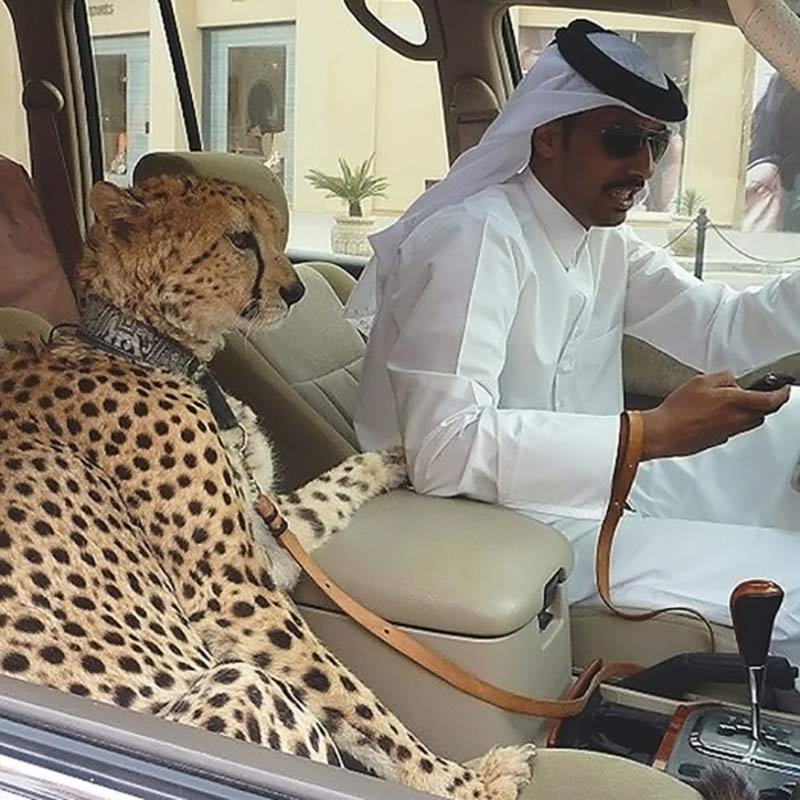 Pets in Dubai