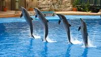 dolphin-show-at-the-dubai-creek-park-in-dubai-230275.jpg