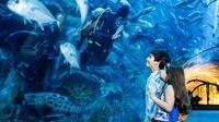 dubai-aquarium-and-underwater-zoo-explorer-package-in-dubai-261764