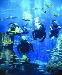 dubai-atlantis-discover-scuba-dive-in-dubai-412153.jpg