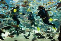 dubai-atlantis-predator-dive-experience-for-certified-divers-in-dubai-343672.jpg