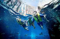 dubai-atlantis-ultimate-snorkel-experience-in-dubai-343601.jpg