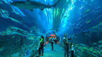 underwater-zoo-dubai-aquarium-and-ice-rink-entrance-ticket-in-dubai-226391.jpg